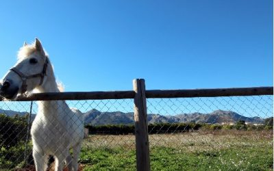 Se vende finca de 13000 m^2 en Pego