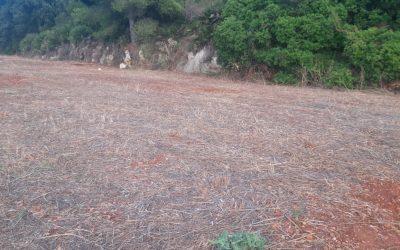 Se vende terreno en Pedreguer
